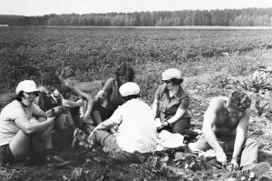 уборка  урожая Октябрь 1975 г